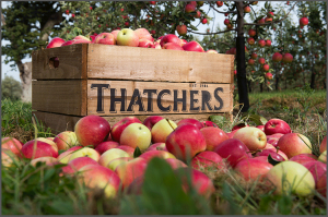 Thatchers-Logo